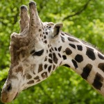 夏休み!★ノースカロライナ動物園に行こう★Asheboro, NC