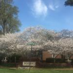 4月のイベント情報 ☆ アトランタ領事館より
