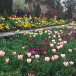 """""""春に訪れたい""""特集☆デューク庭園Duke Garden (Durham, North Carolina)"""