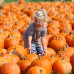 アメリカの秋、『パンプキン狩り』を楽しみましょう。